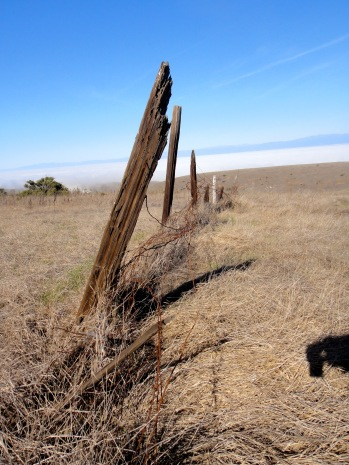 Ranching Fence